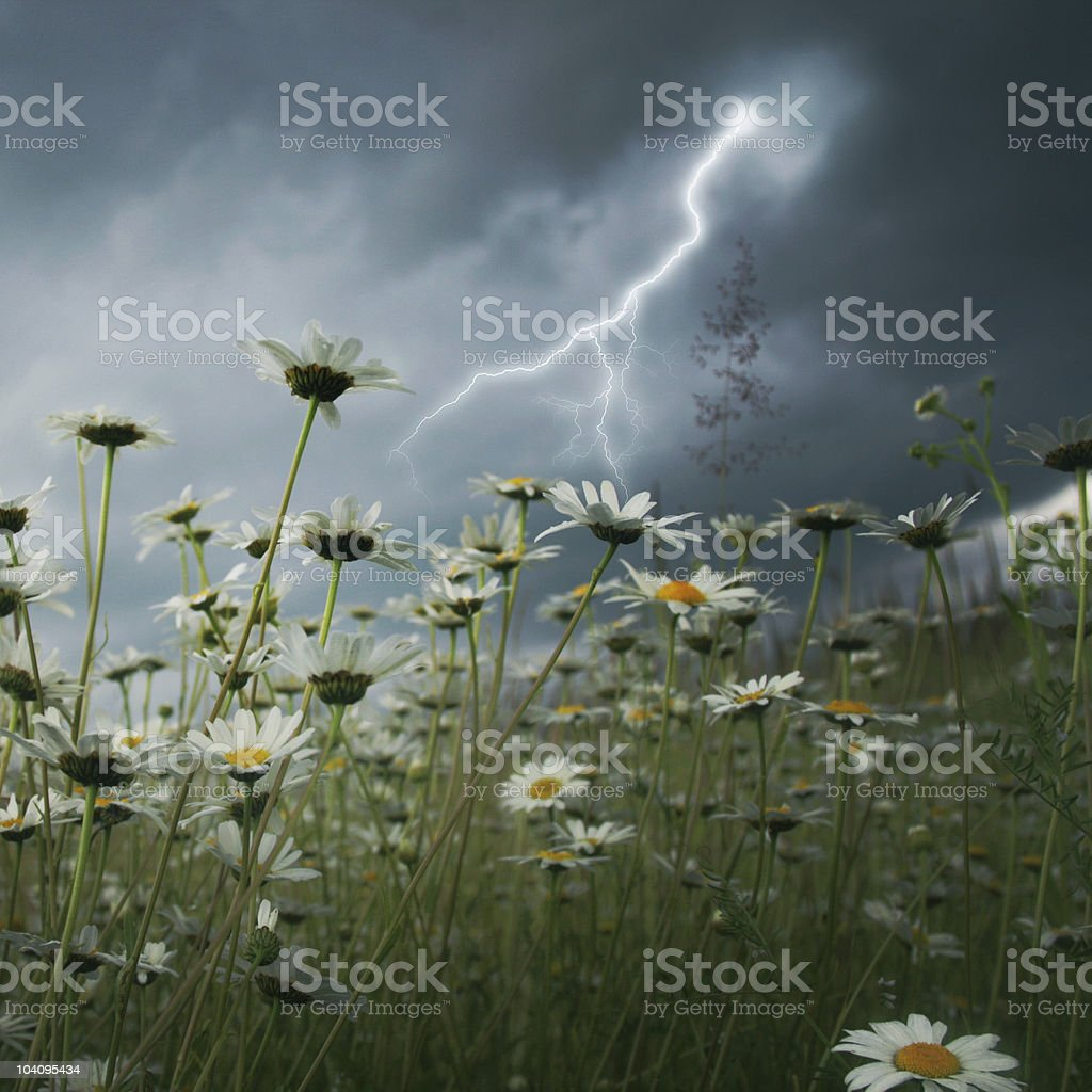 Lightning strike over field. stock photo