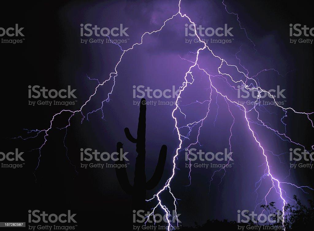 lightning strike over Saquaro Cacti royalty-free stock photo