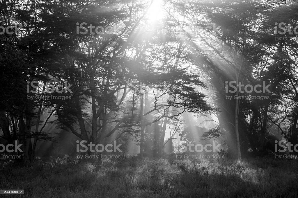 Lights at Nakuru Forest stock photo