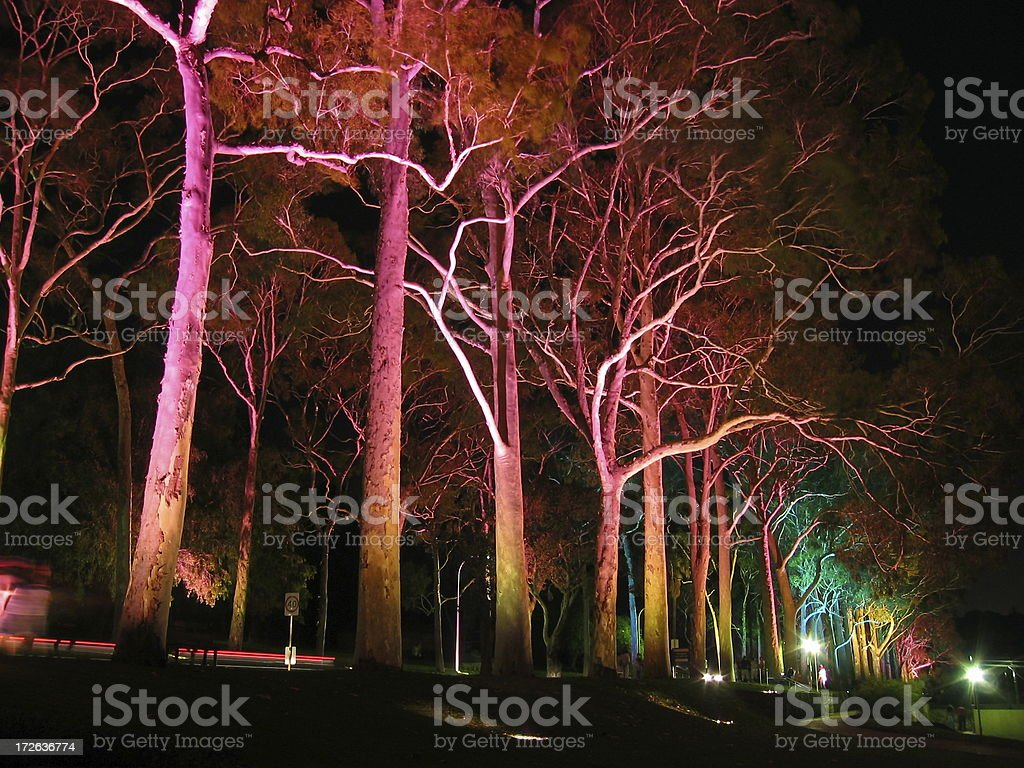 Lights shining on trees stock photo