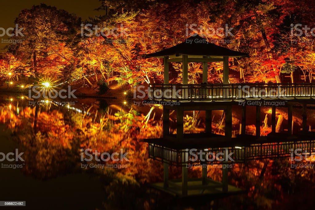 Light-up autumn leaves stock photo