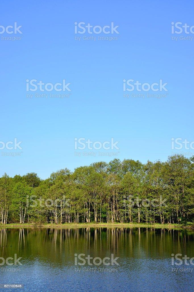 lignosa stock photo