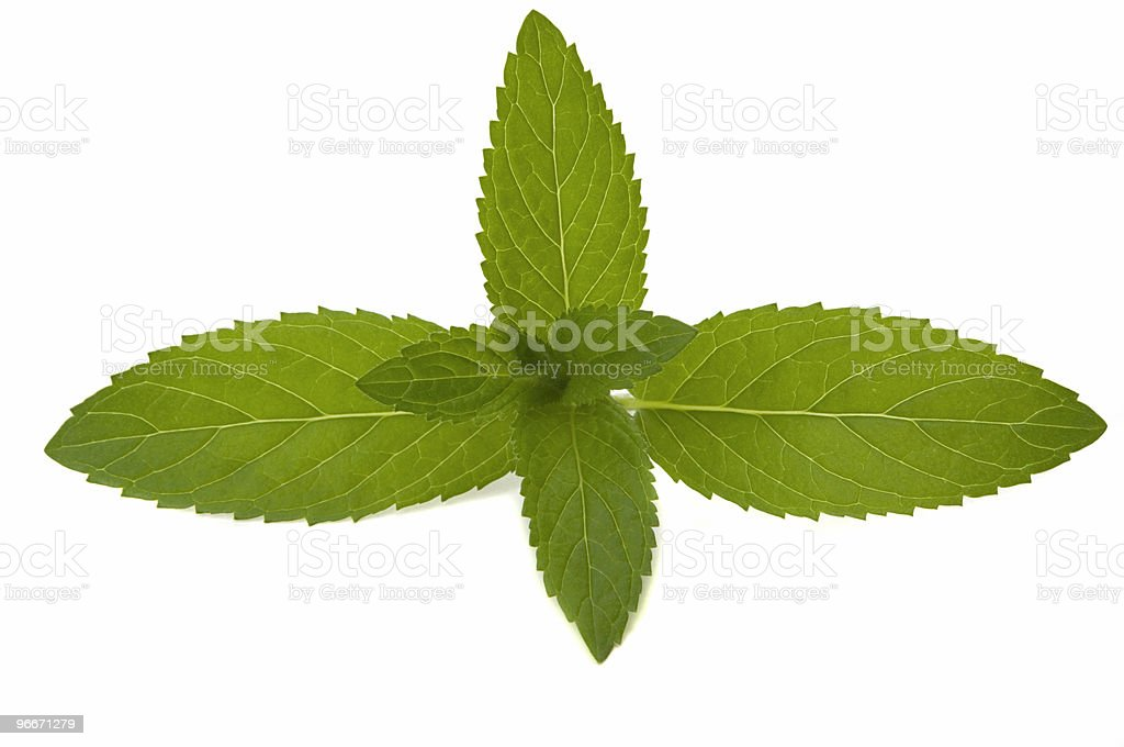 Mint Herb royalty-free stock photo