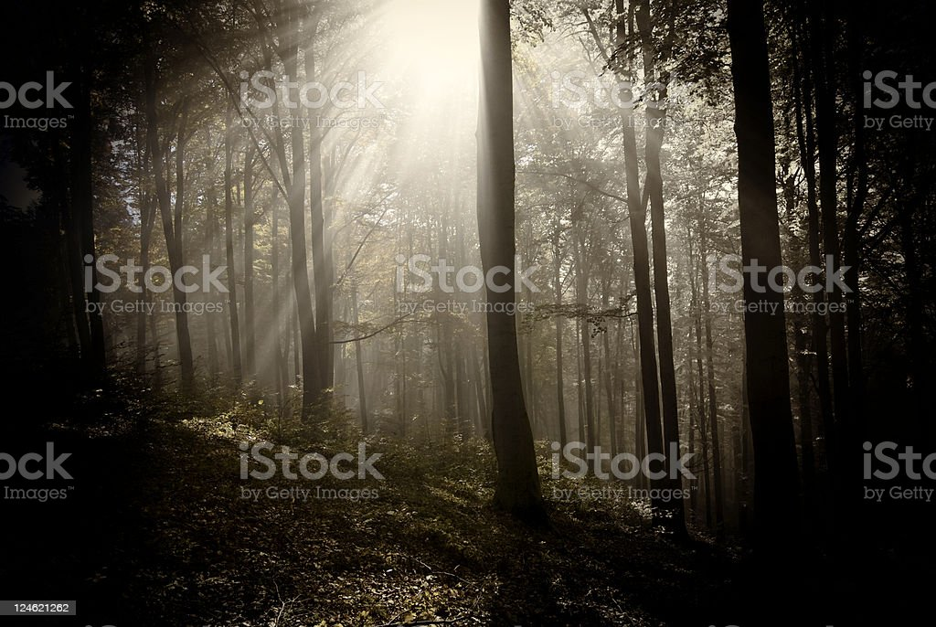 like in my dream royalty-free stock photo