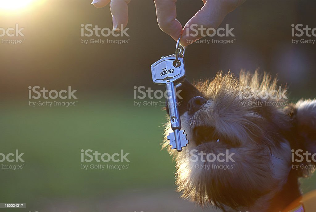 Like to go home royalty-free stock photo