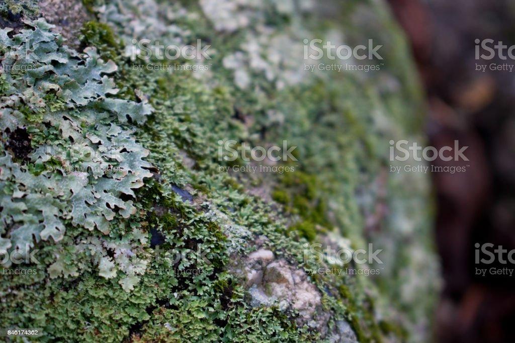 Liken & Rock stock photo