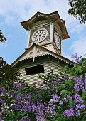lilac a clock tower