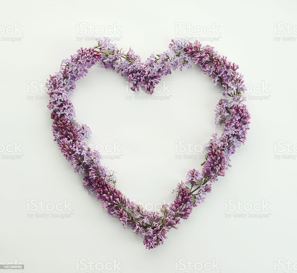 lilac flowers in the form of heart stock photo