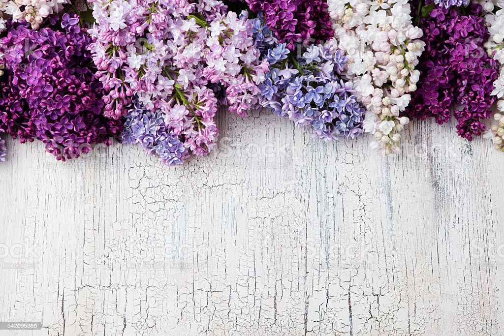 Lilac flowers on crackling wooden background Top view copy space stock photo