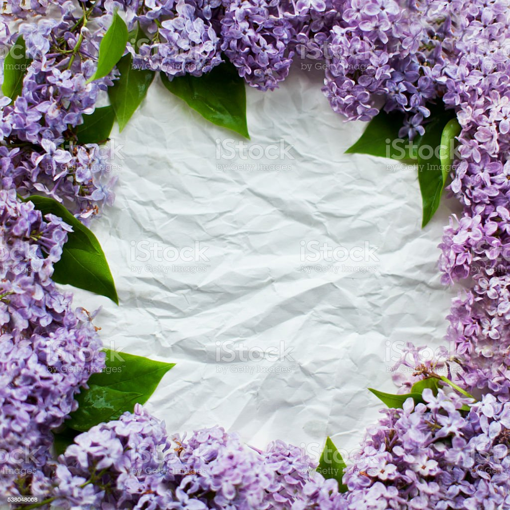 Lilac frame stock photo
