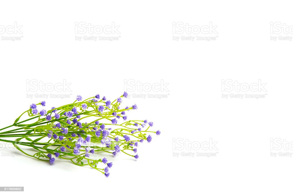 Lilac or violet colored flowers isolated on white background. stock photo