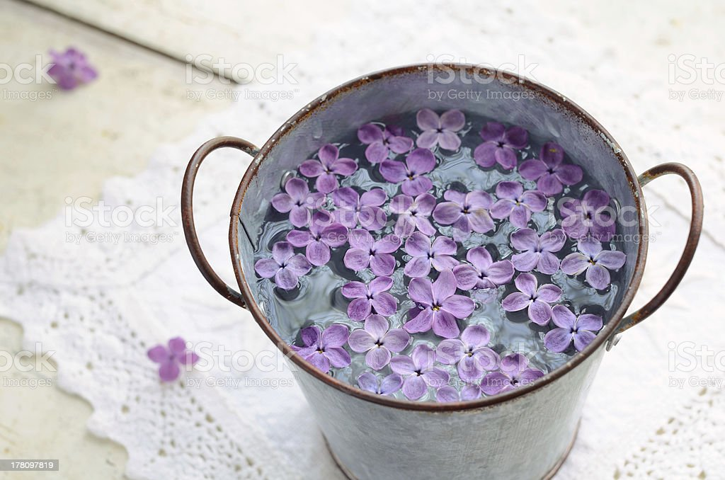 Lilac petals in water royalty-free stock photo