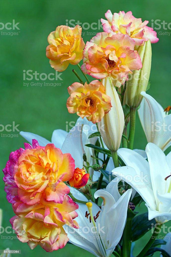 Lilies and shrub rose 'Bonanza' stock photo