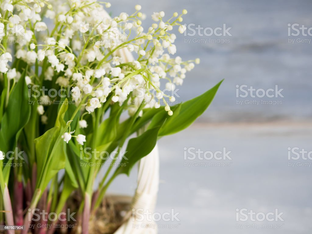 Lilies in a white wicker basket. Fresh spring flowers as a gift. Free space on the right for text or design stock photo
