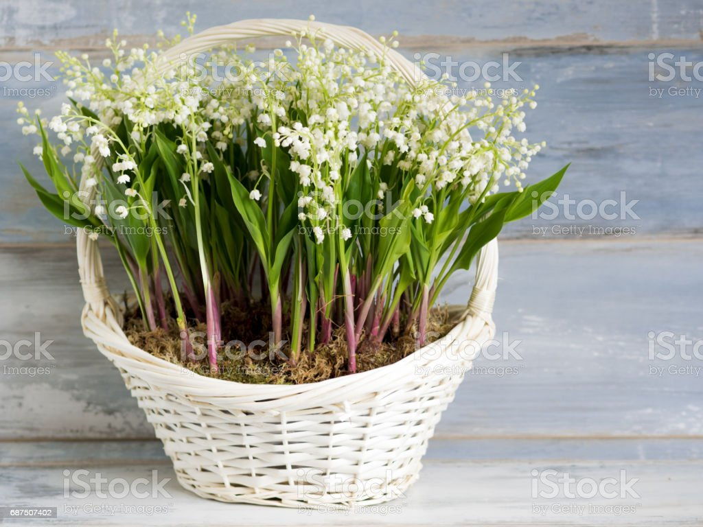Lilies in a white wicker basket. Fresh spring flowers as a gift. stock photo