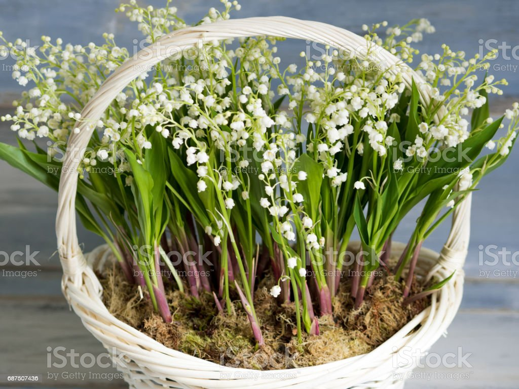 Lilies in a white wicker basket. Fresh spring flowers as a gift. Close-up stock photo