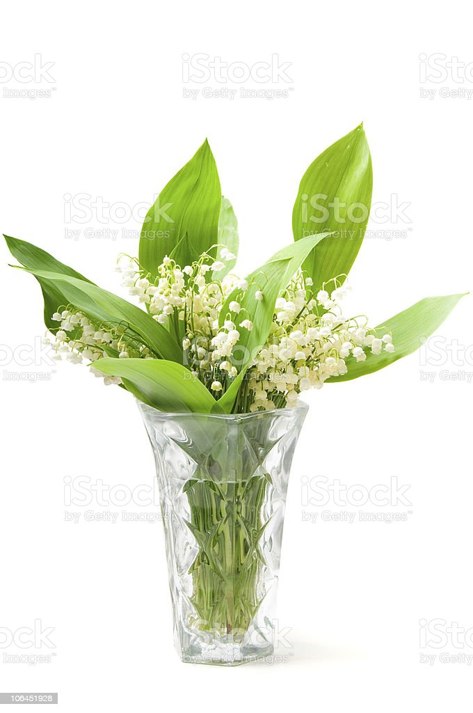 Lilies on the vase royalty-free stock photo