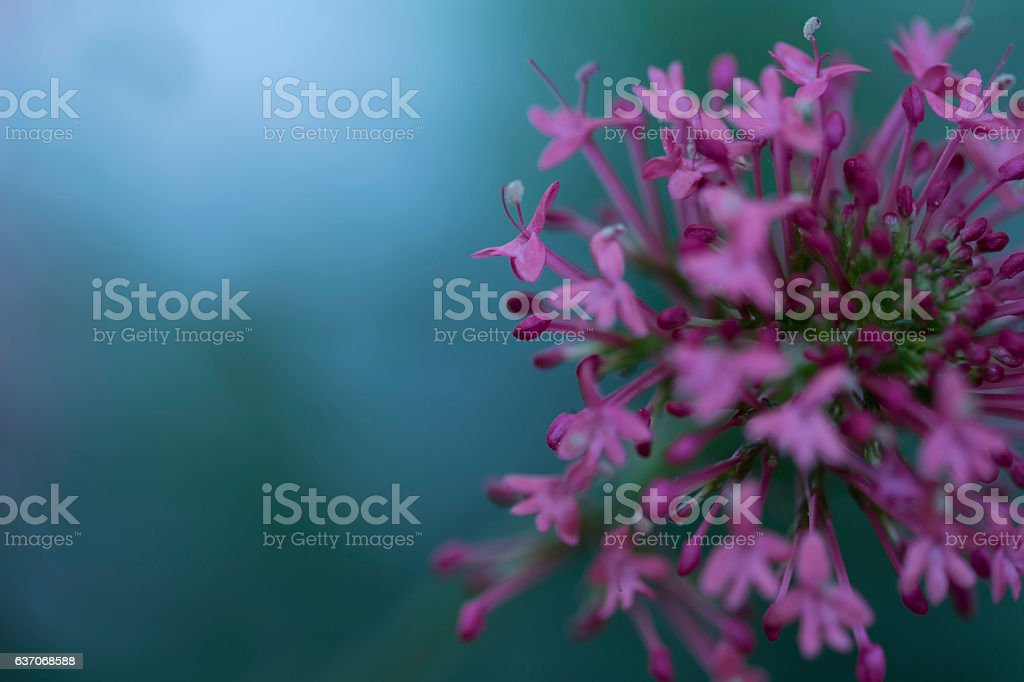 Lilium with a nice background stock photo