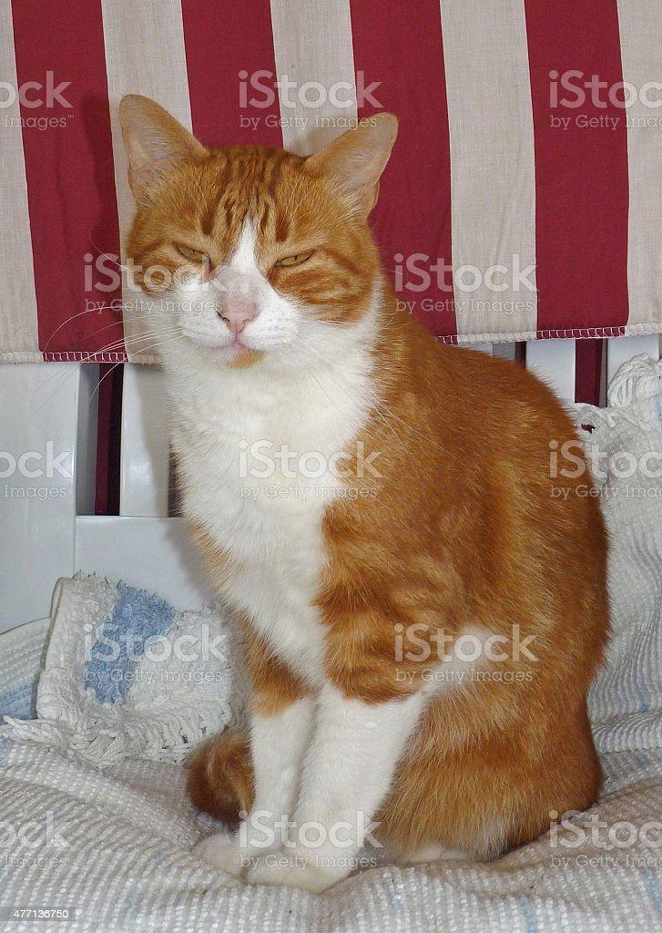 Lillo il mio gatto domestico stock photo