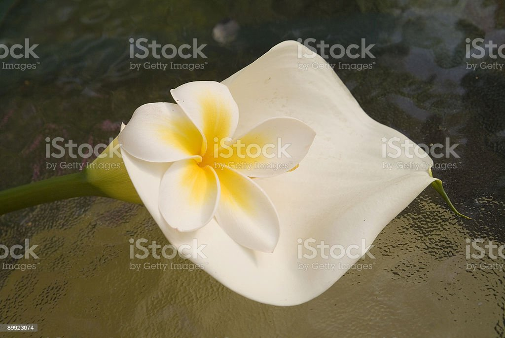 Lilly and Plumeria stock photo