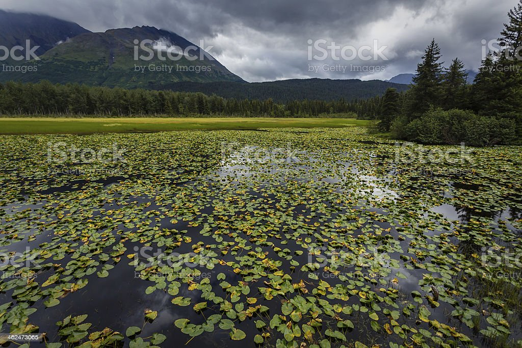 Lilly pads and mountains in Alaska stock photo