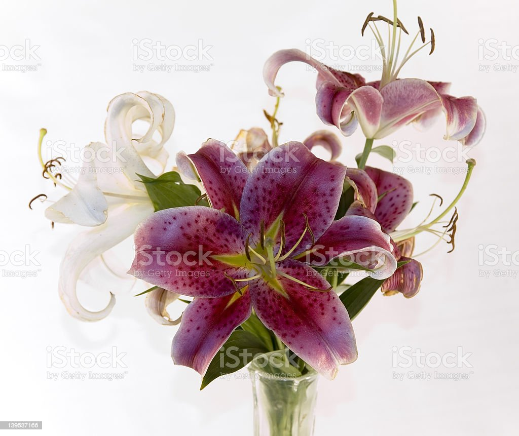 Lilly's in a vase stock photo