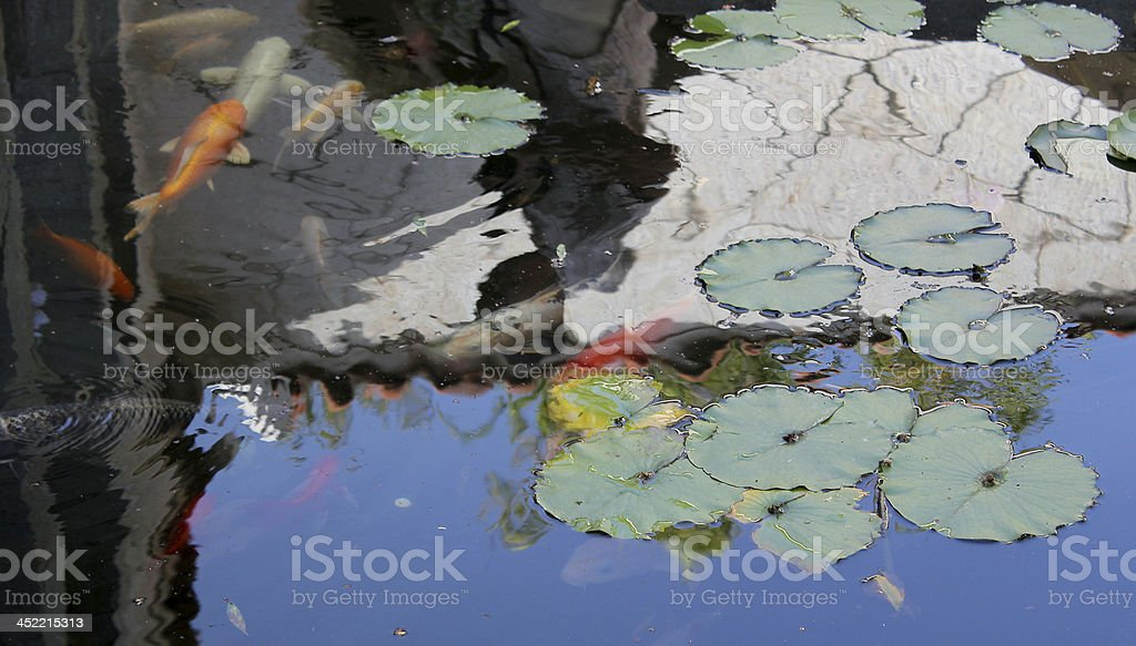 lily and fish royalty-free stock photo
