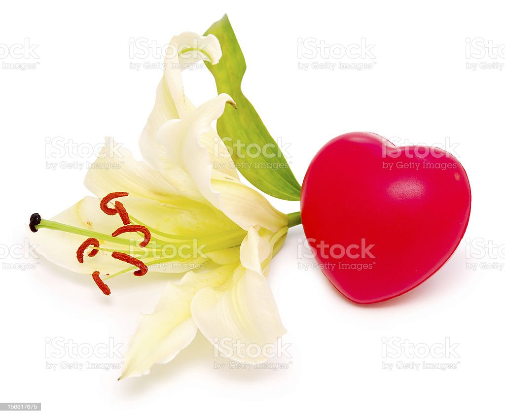 lily and heart royalty-free stock photo
