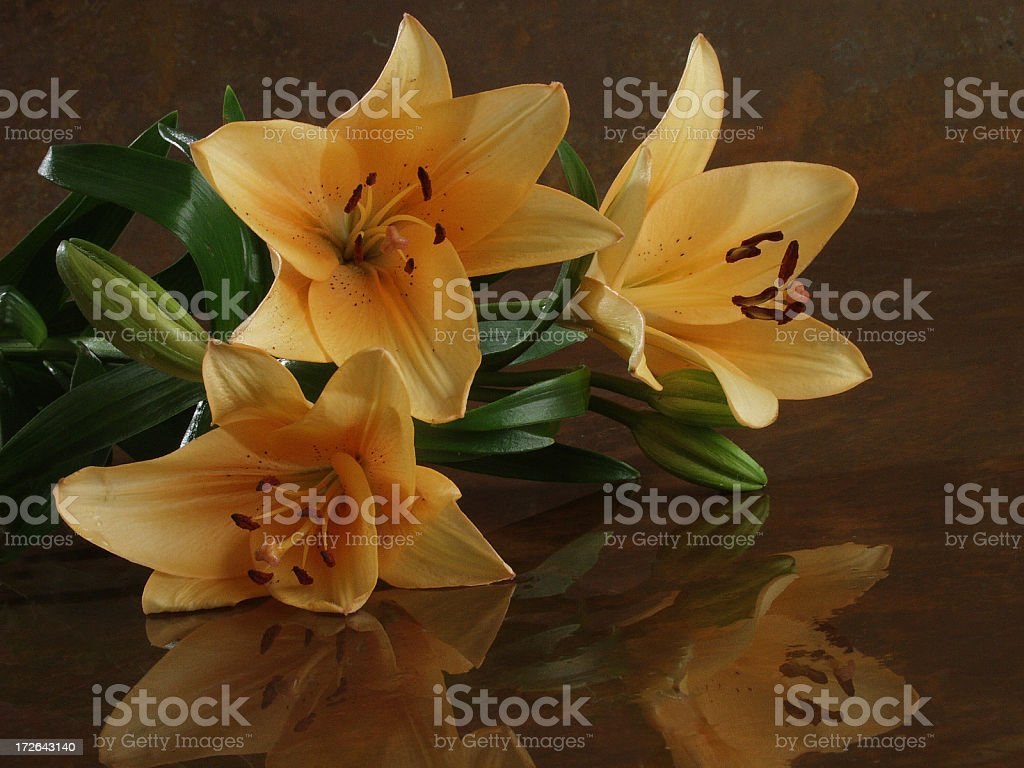 Lily and reflection royalty-free stock photo