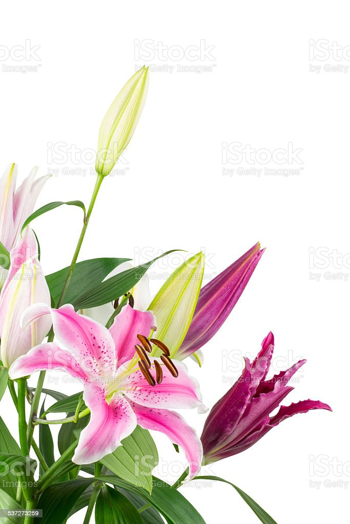 Lily bouquet isolated on white stock photo