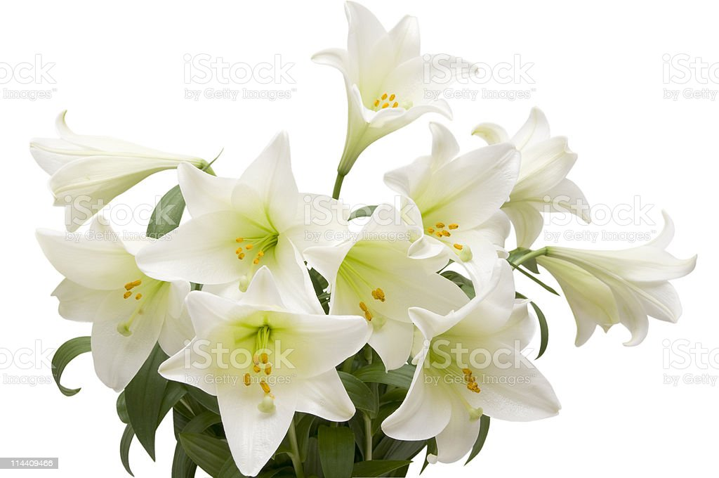 Lily bouquet royalty-free stock photo