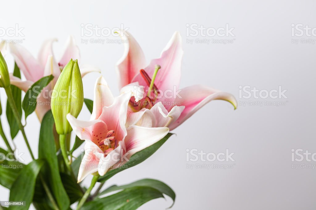 lily bouquet  studio shot with copy space stock photo