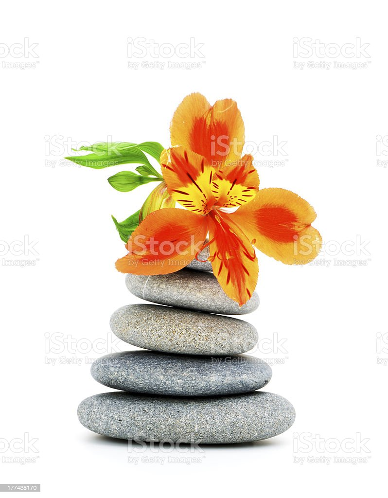 Lily flower and pebble. royalty-free stock photo
