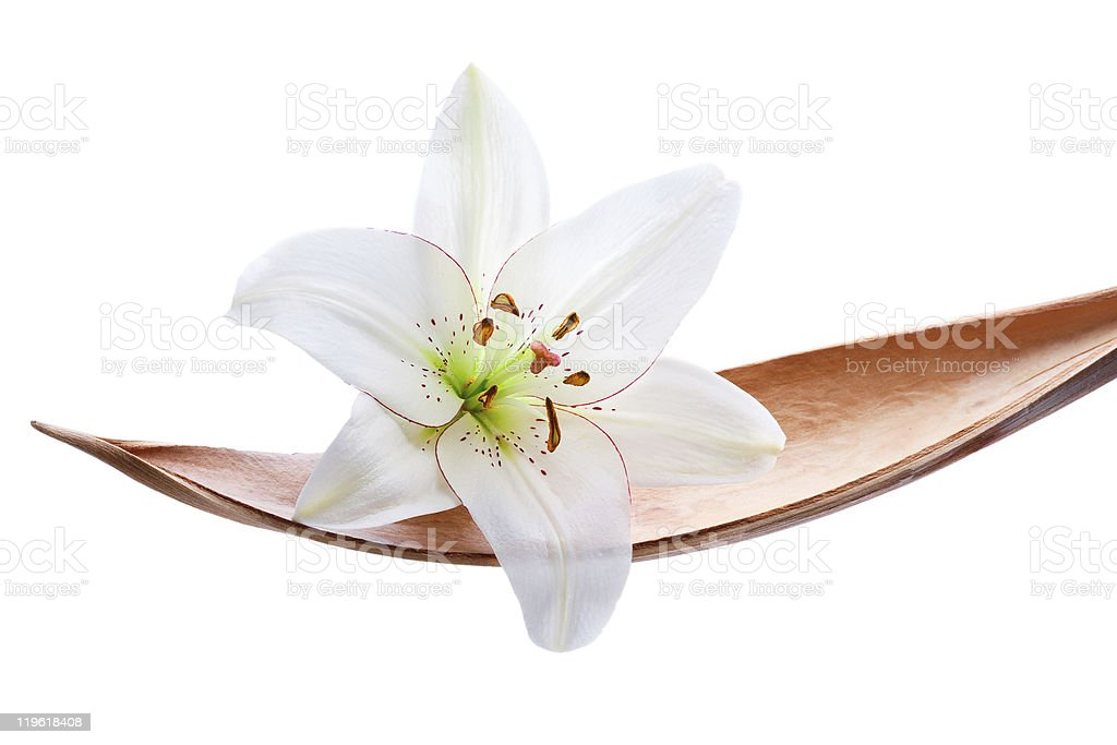 Lily flower on a coco leaf, isolated over white royalty-free stock photo