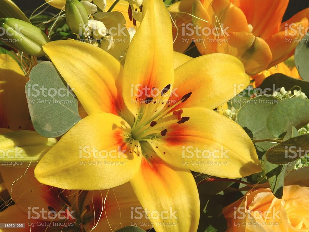 Lily flower royalty-free stock photo