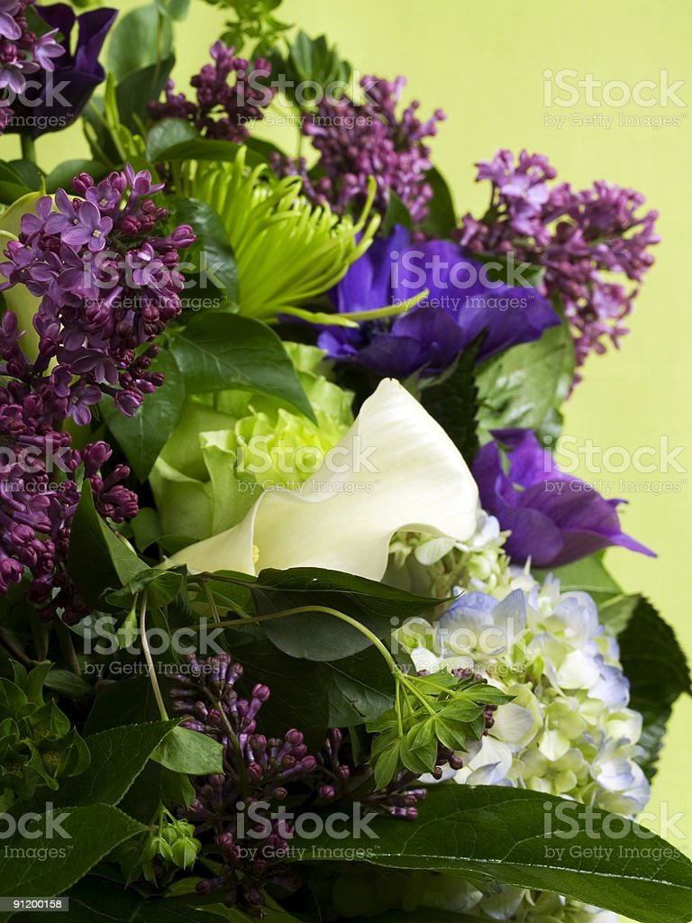 Lily in Lilacs royalty-free stock photo
