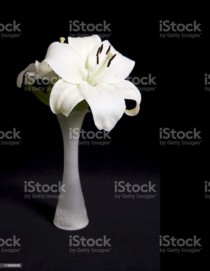 Lily in Vase royalty-free stock photo