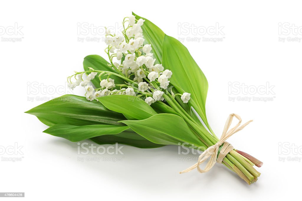 lily of the valley posy stock photo
