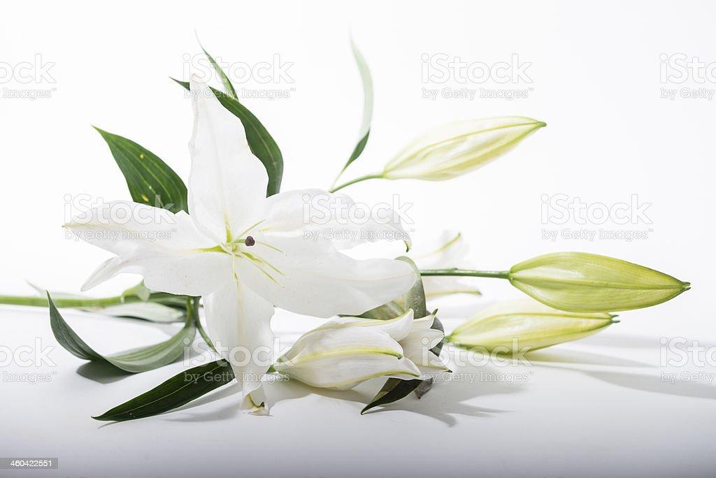 Lily on white background stock photo