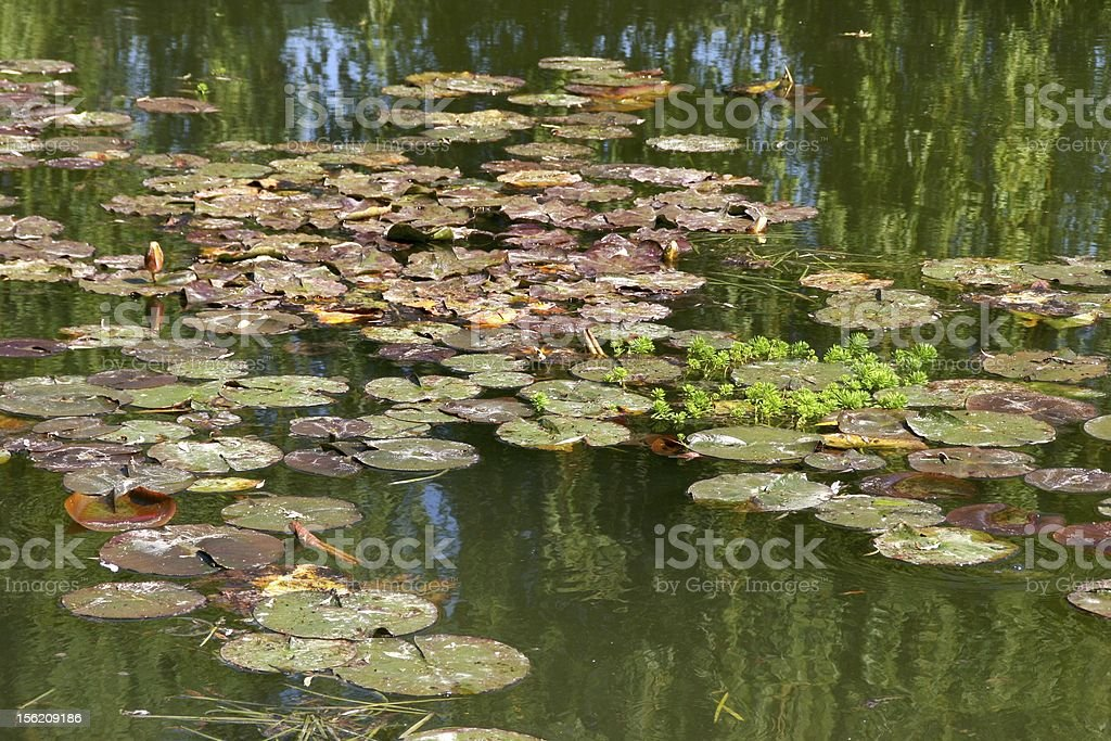 Lily pads and reflections from Monet's garden at Giverny, France stock photo