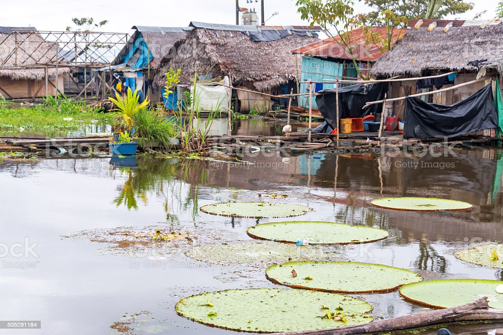 Lily Pads in a Slum stock photo