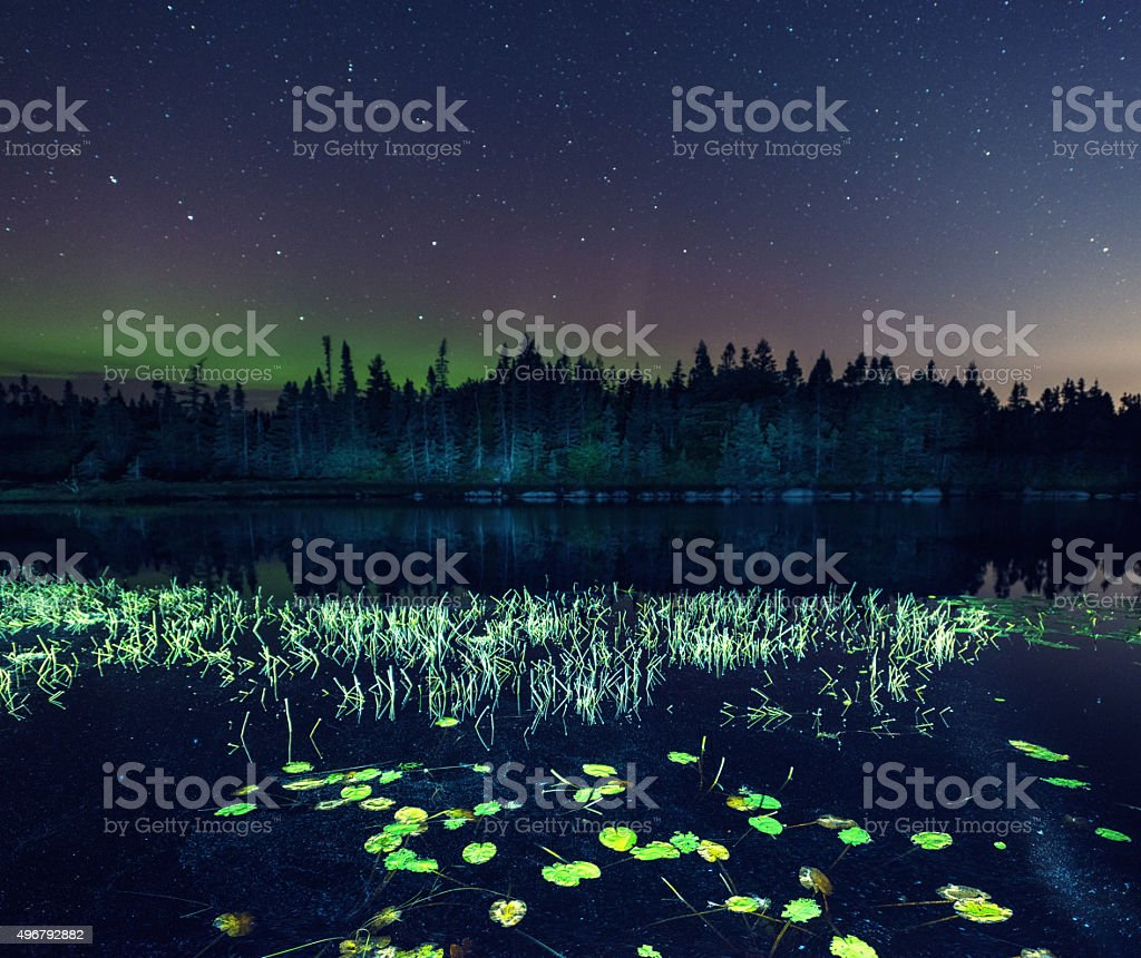 Lily Pads in Northern Lake stock photo