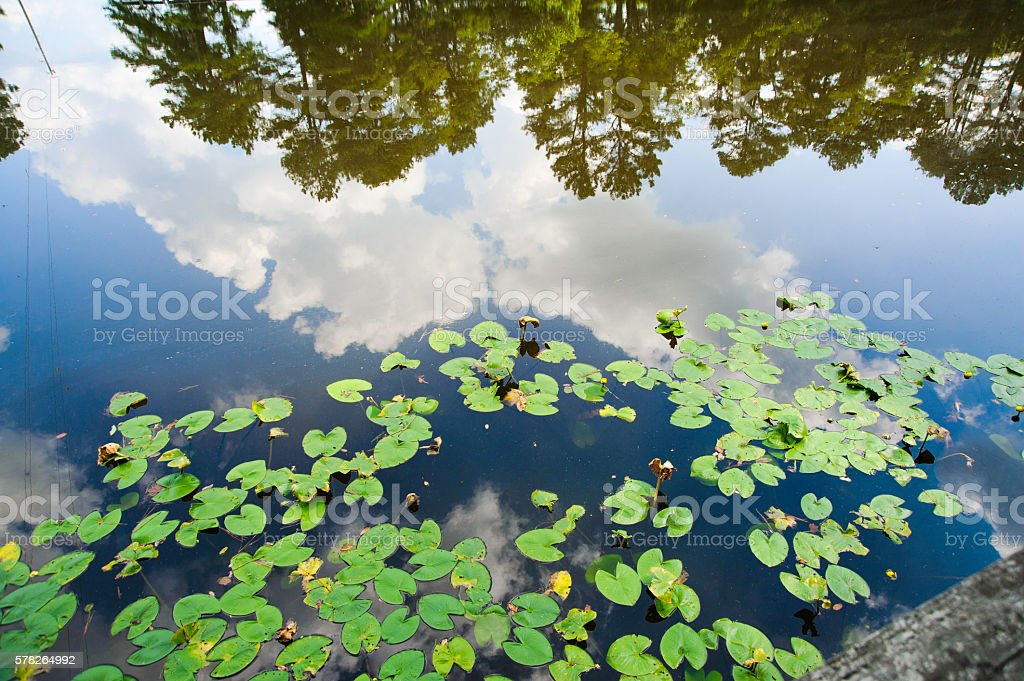 Lily Pads in the Sky stock photo