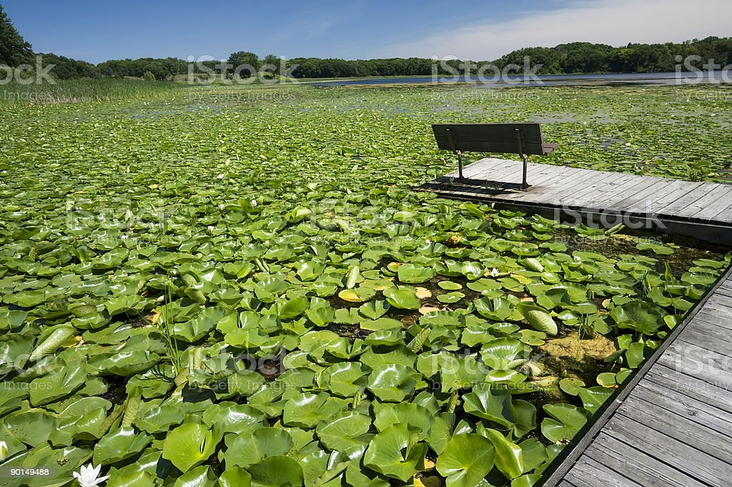 Lily Pond with Seat stock photo