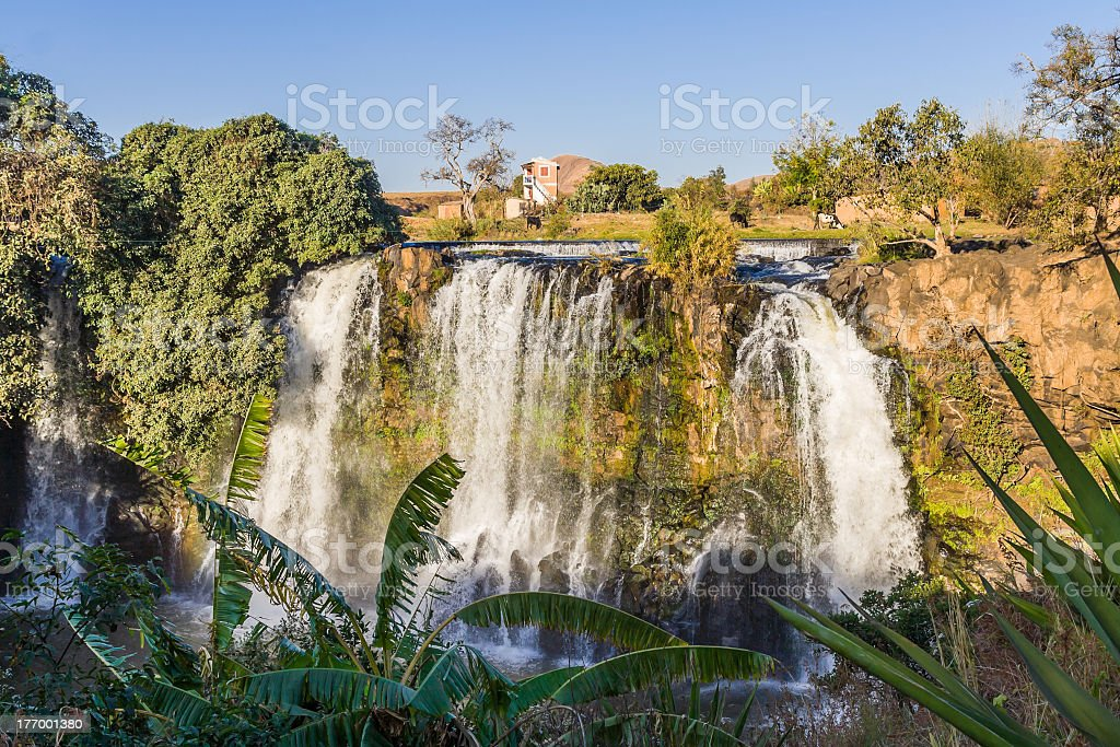 Lily waterfall royalty-free stock photo