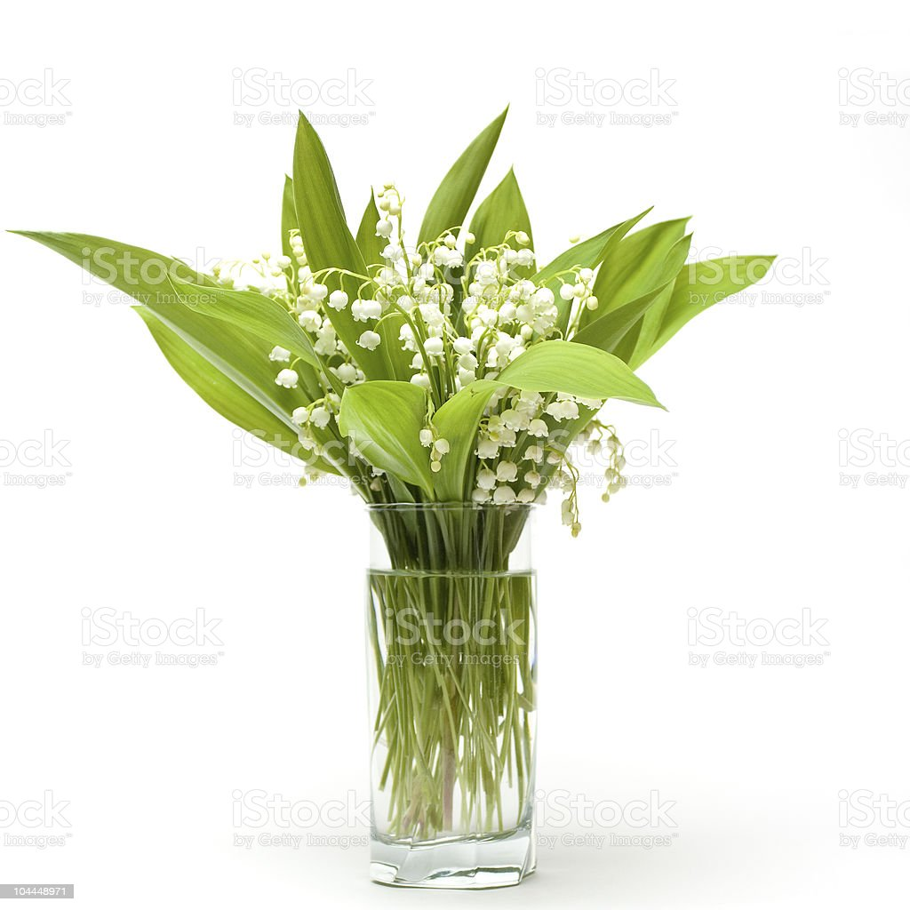 lily-of-the-valley bouquet royalty-free stock photo
