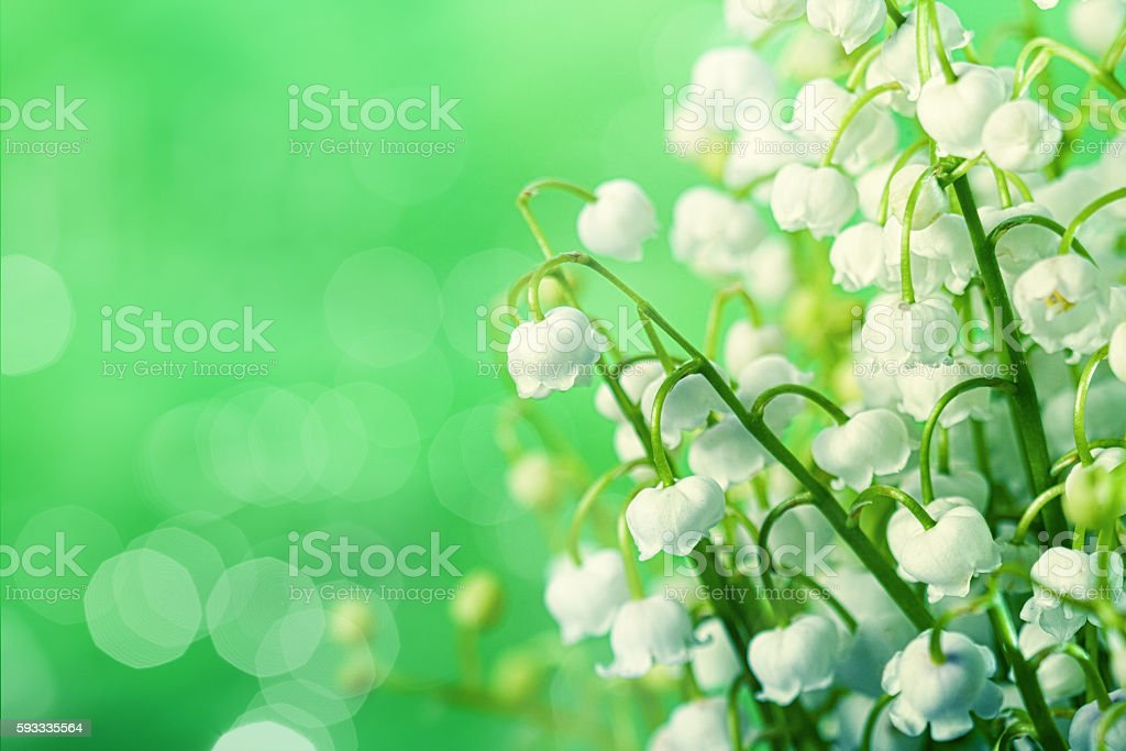 lily-of-the-valley flowers over green natural backgrounds with b stock photo