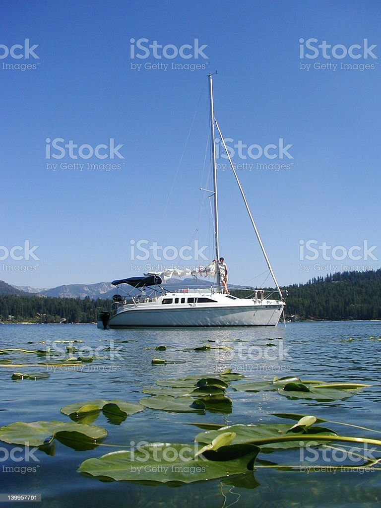 Lilypad Anchorage royalty-free stock photo