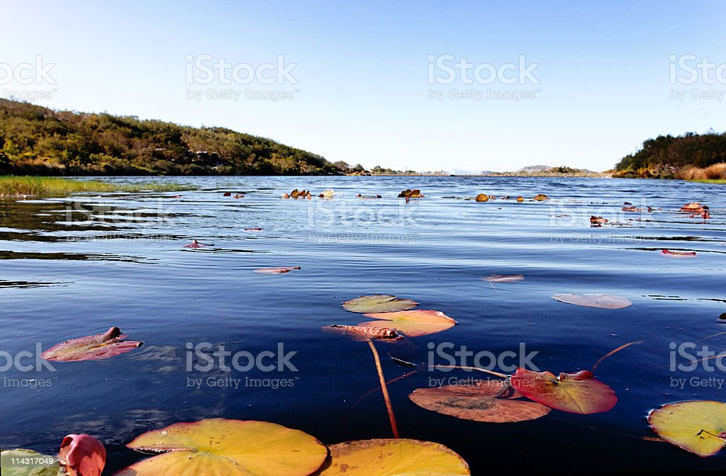 Lily-pad lake royalty-free stock photo
