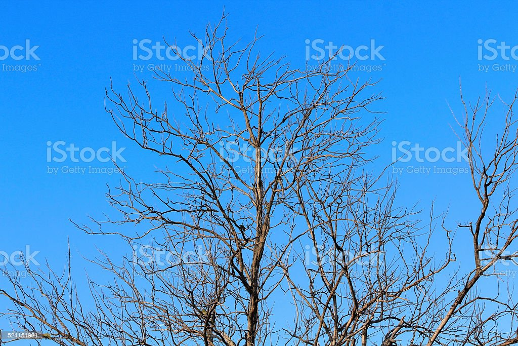 limb tree over the autumn fall background at silhouette stock photo